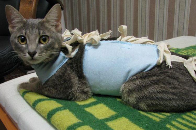 Кошка в послеоперационной попоне