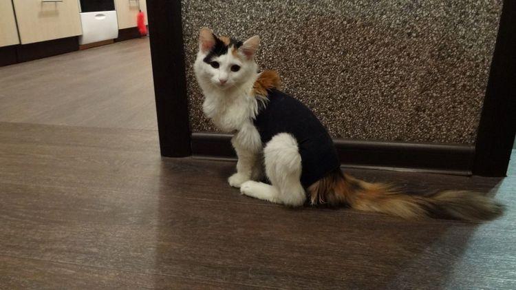 Бандаж для кошки из носка