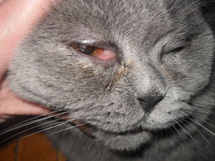 Инфекция у кота