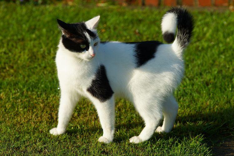 Кошка злится