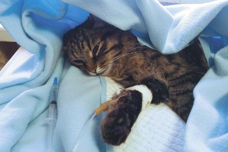 Лучевая терапия кошек