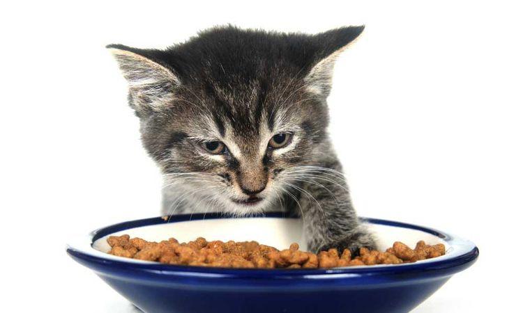 Котенок не ест корм