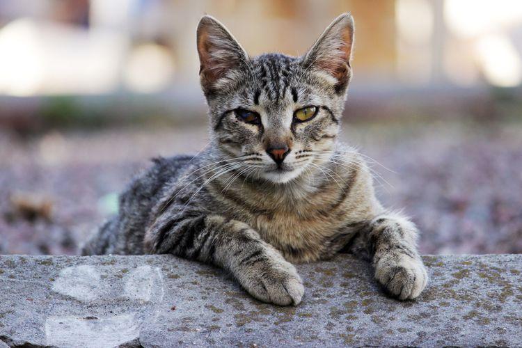 Кот с инфекционным заболеванием
