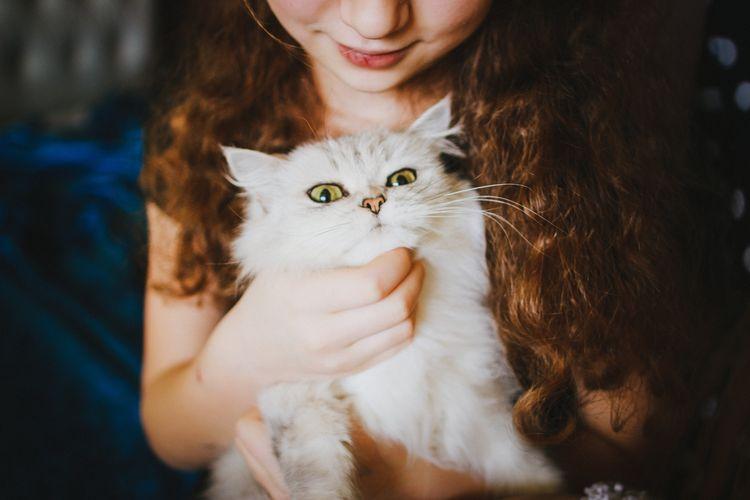 Белый кот на руках у девочки