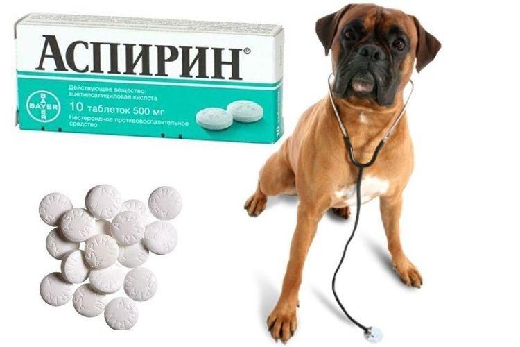 Аспирин для собаки