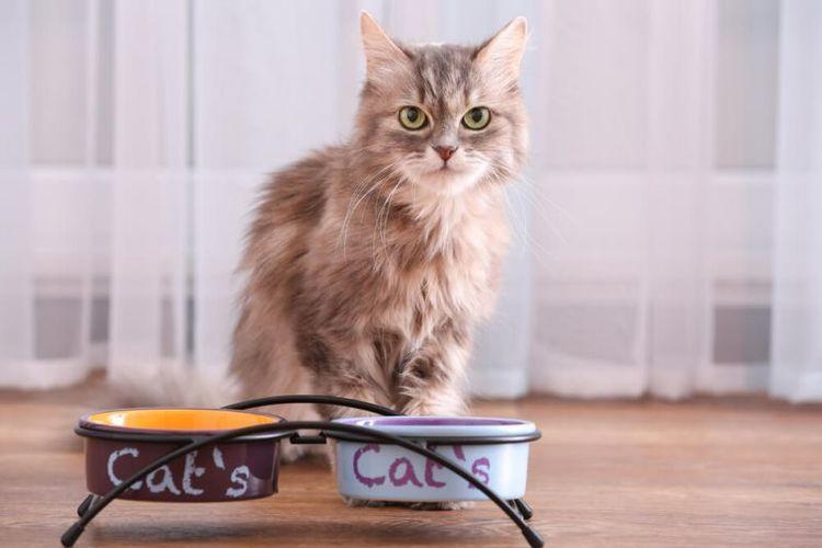 Кошка у мисок