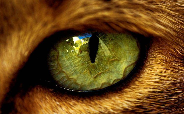 Глаз кошки