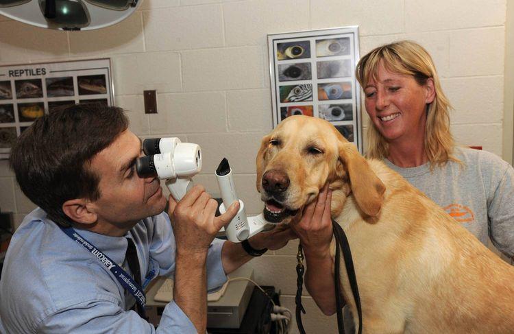 Диагностика бельма на глазу у собаки