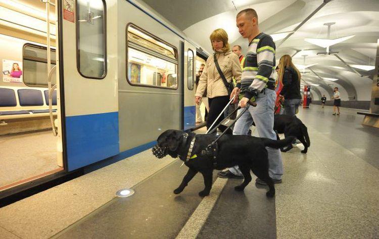 Собака заходит в метро