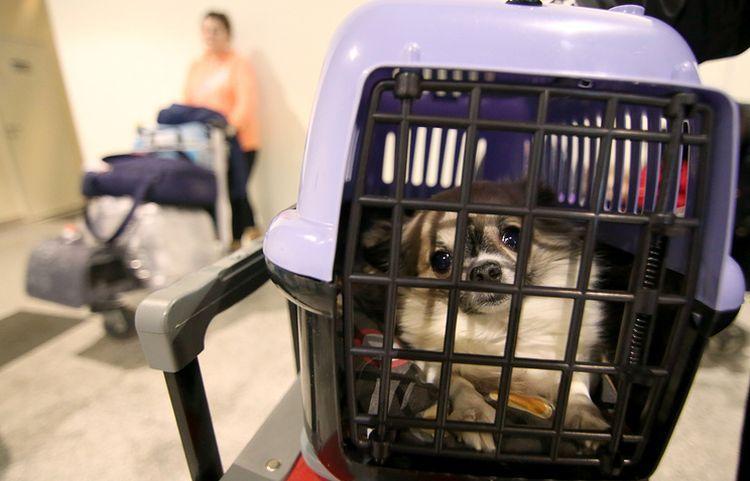 Собака в перевозке