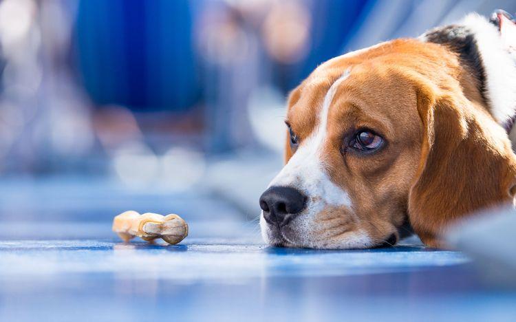 Собака хочет конфету