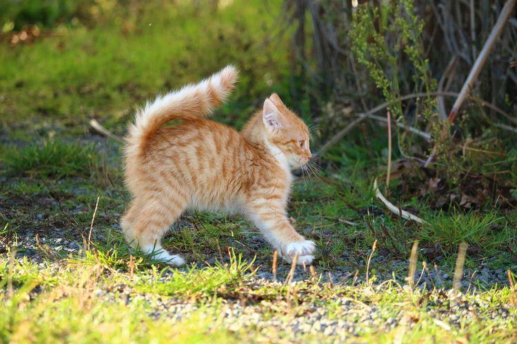 Рыжий котенок испугался