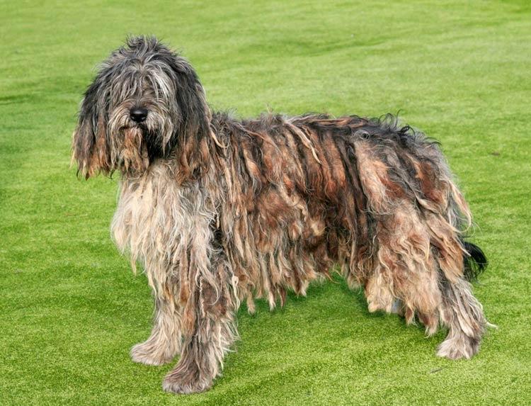 как уходивать за дредами собаки