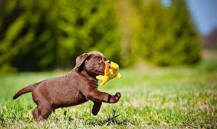 Забавный щенок