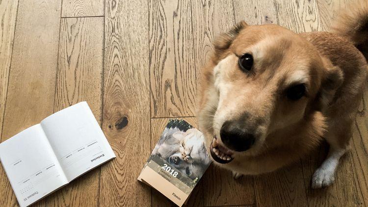 Корм для собак Фитмин