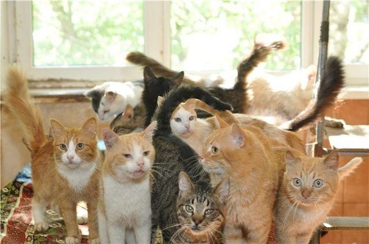 Чрезмерная любовь к кошкам