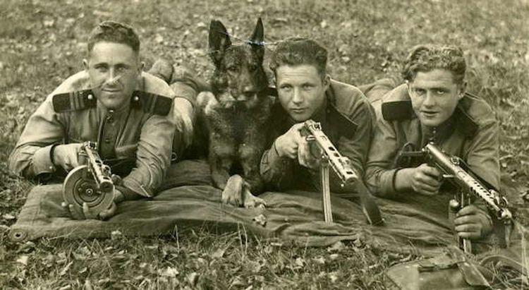 Сторожевые собаки во времена ВОВ