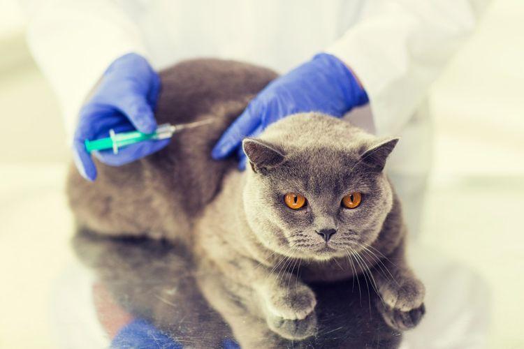Коту делают укол