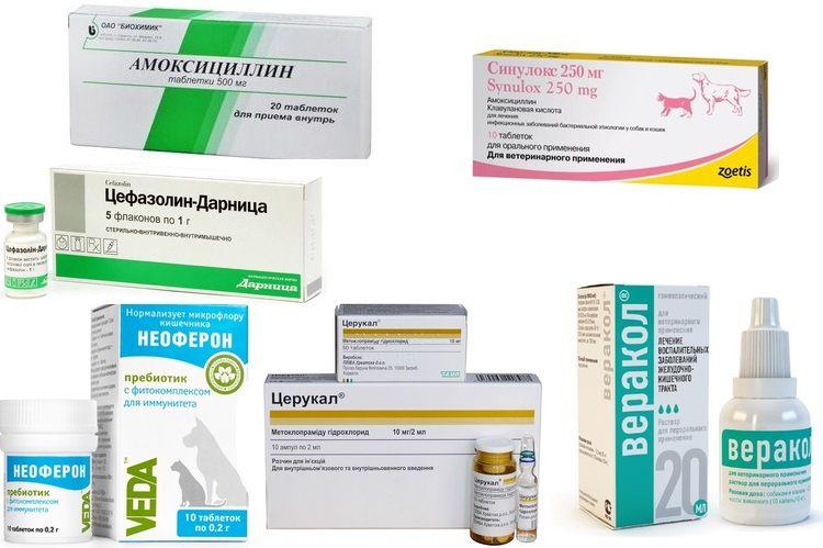 Лечение низких лейкоцитов у кошек