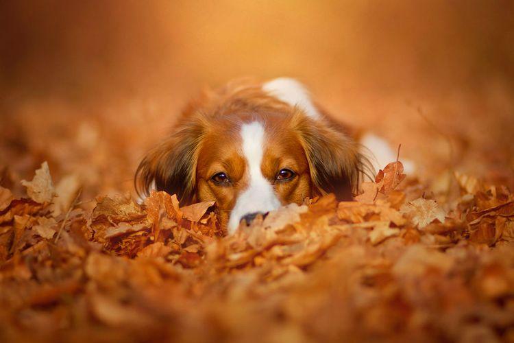 Собака в осенней листве