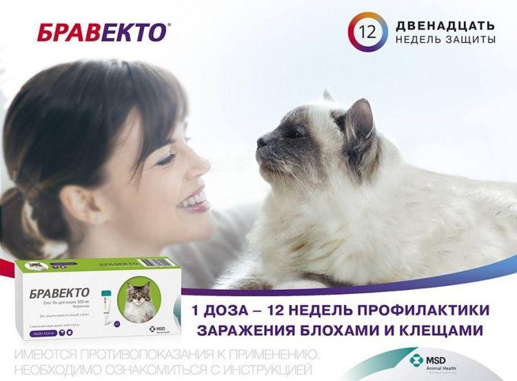 Бравекто для кошек