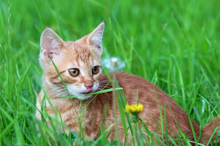 Кот на природе