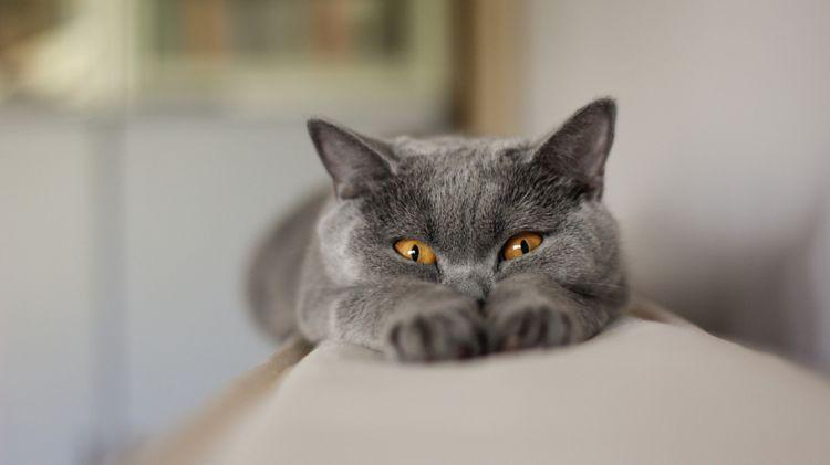 Кот лежит на спинке дивана