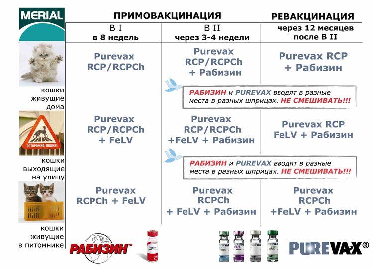 График вакцинации кошек