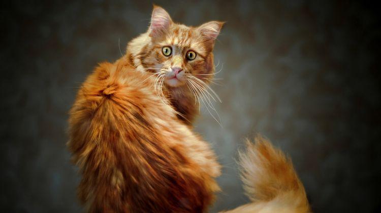 Удивленный кот