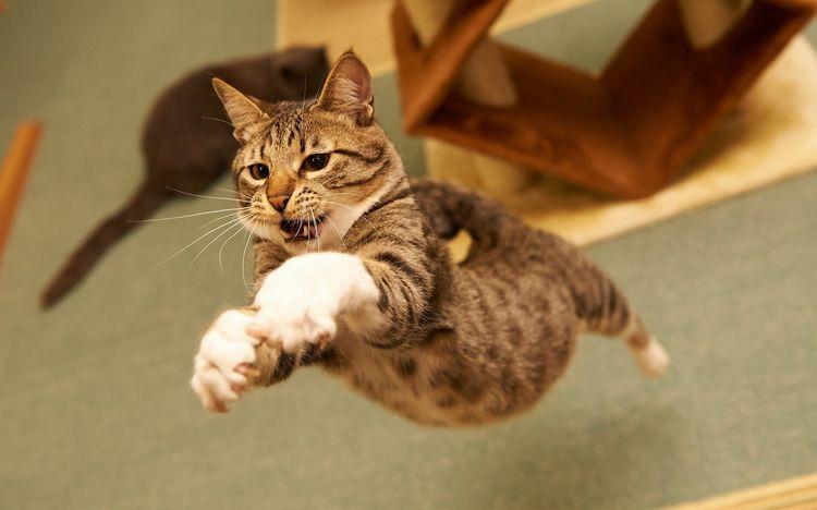 Летающий кот