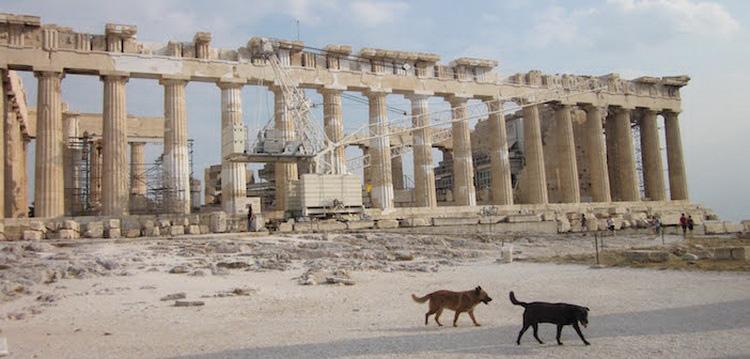 греческая универсальная собака Алопекис