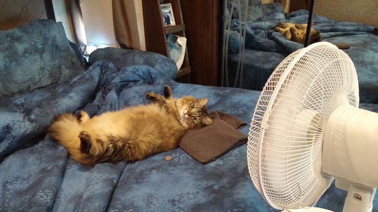 Кот под вентилятором