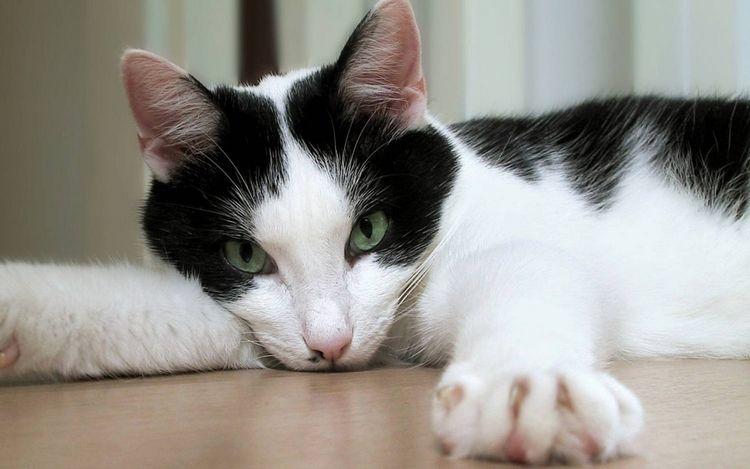 Как помочь кошке в жару в квартире