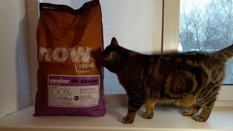 Кошка и корм Now Natural Holistic - корм для кошек