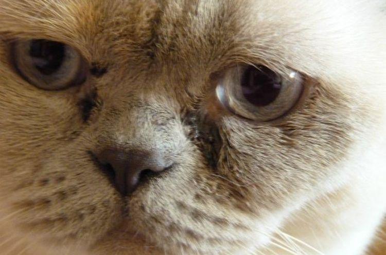 Выделения из глаз у кота