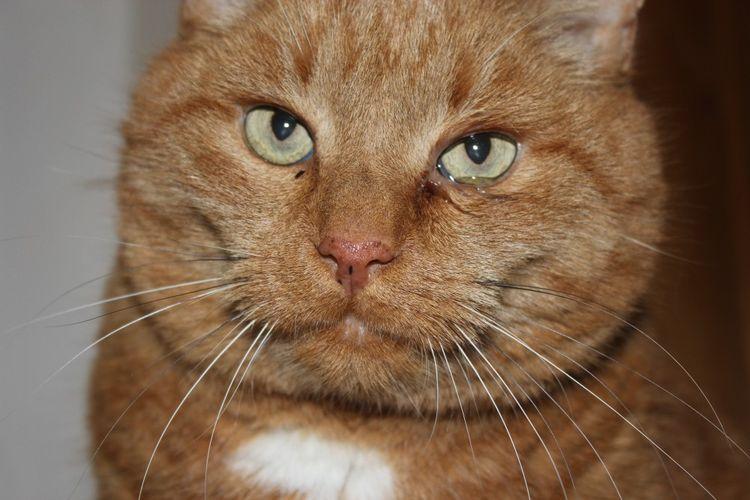 Коричневые выделения из глаз кота
