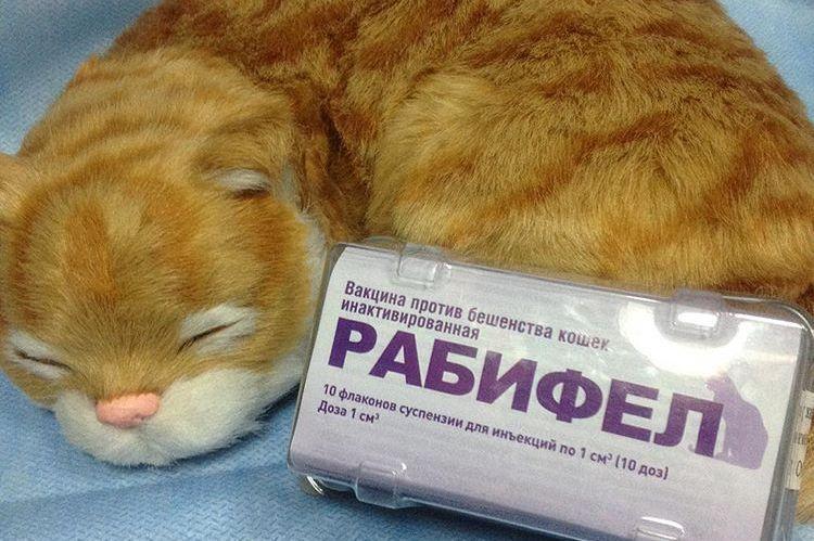 Рабифел для кошек