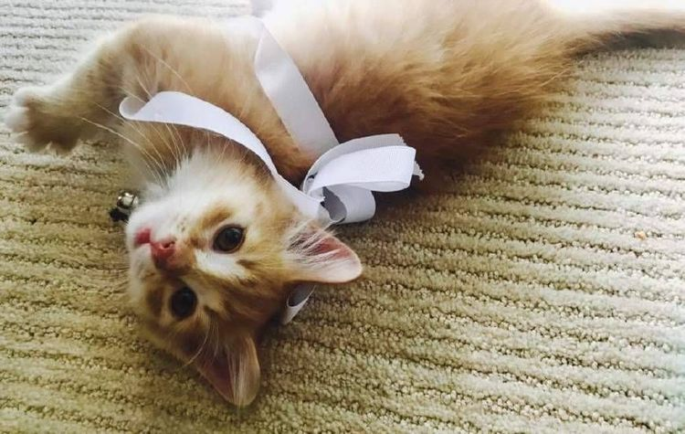 Котенок с бантиком