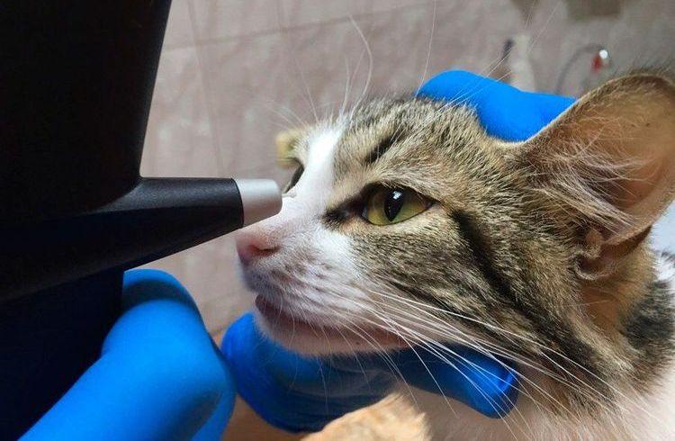 Кот у офтальмолога