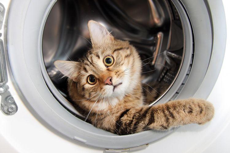 Кошка прячется в стиральной машине