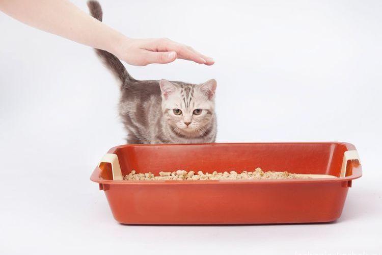 Кошка и лоток