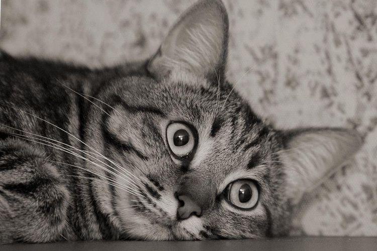 Грустный полосатый кот