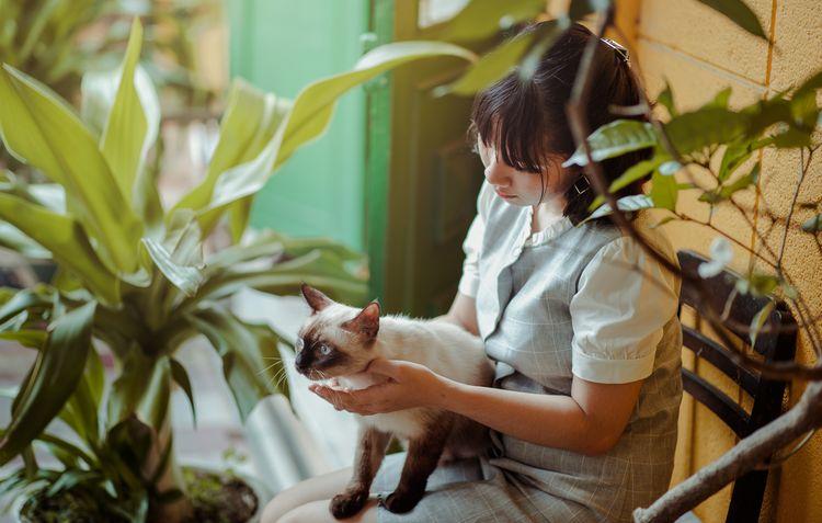 Сиамская кошка с хозяйкой