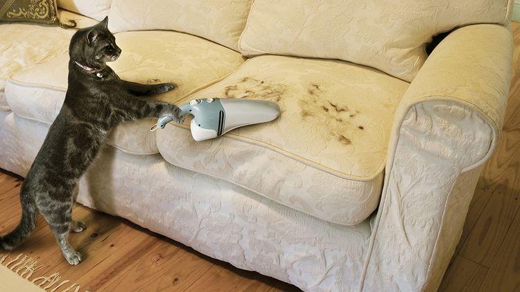 Как избавиться от шерсти собаки или кошки в квартире
