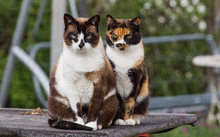 Клички для трехцветных кошек
