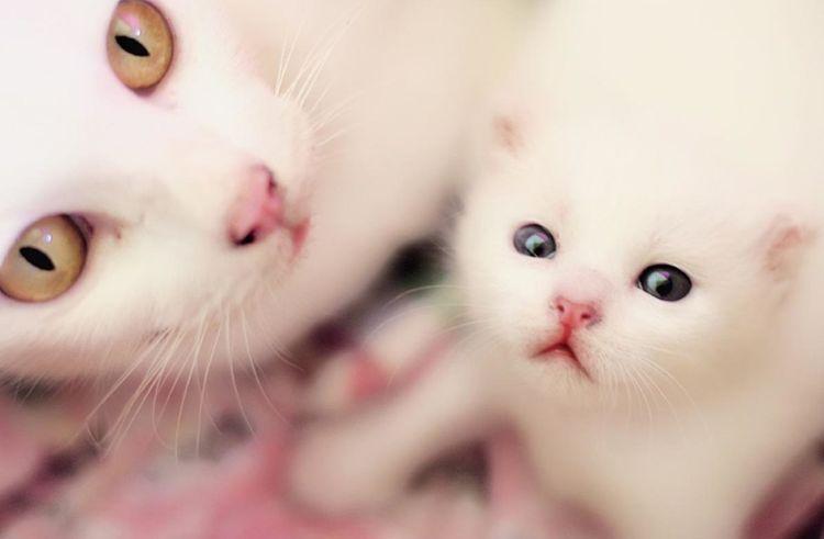 Кошка и ее котенок