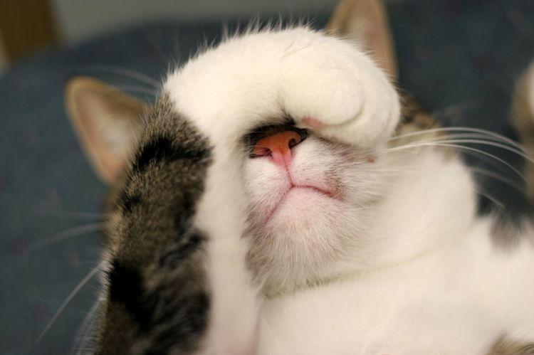 Кот закрывает глаз лапой