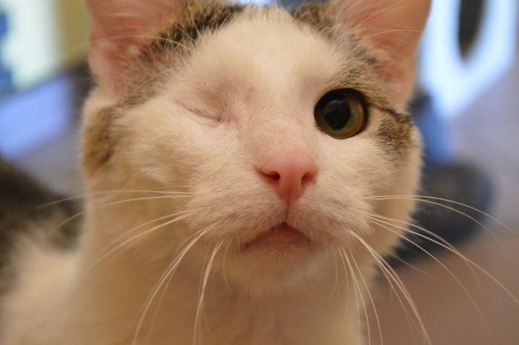 Кот без глаза