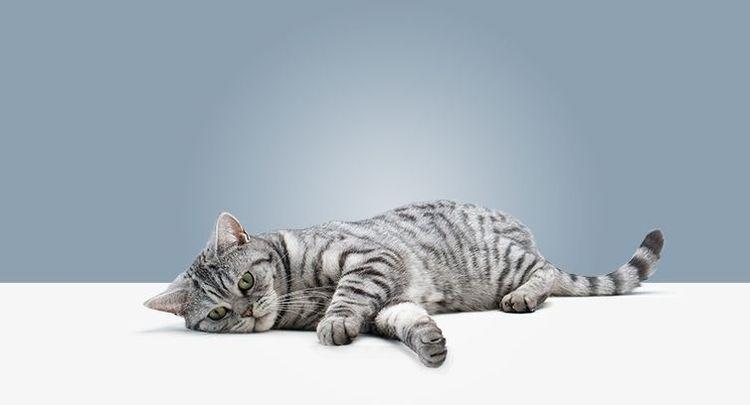 У кота плохо ходят задние лапы