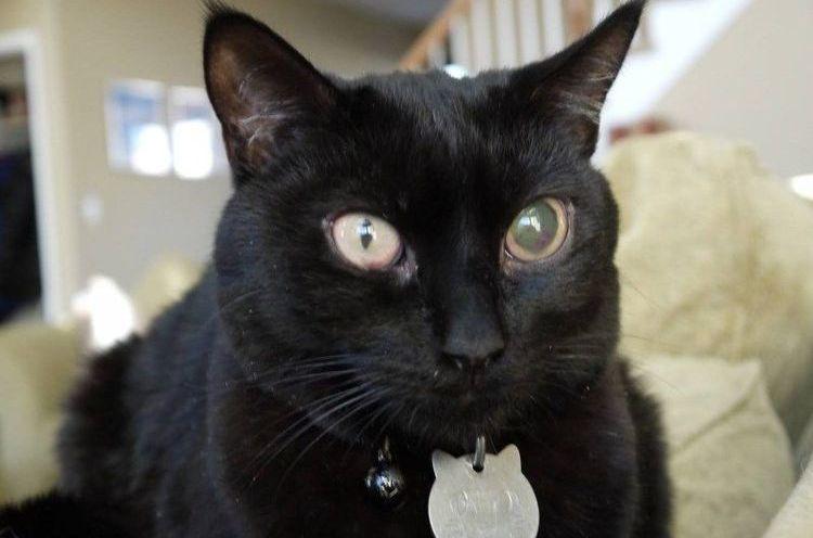 Побелел глаз у кота